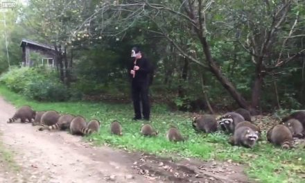 Amikor a patkányfogó legendája életre kel