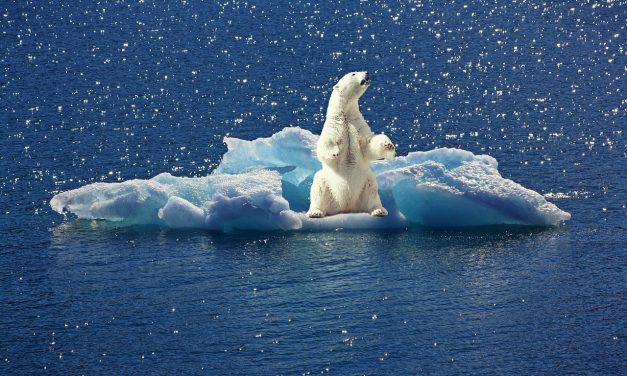 Lesújtó jelentést közölt a WWF Földünk jelenlegi állapotáról
