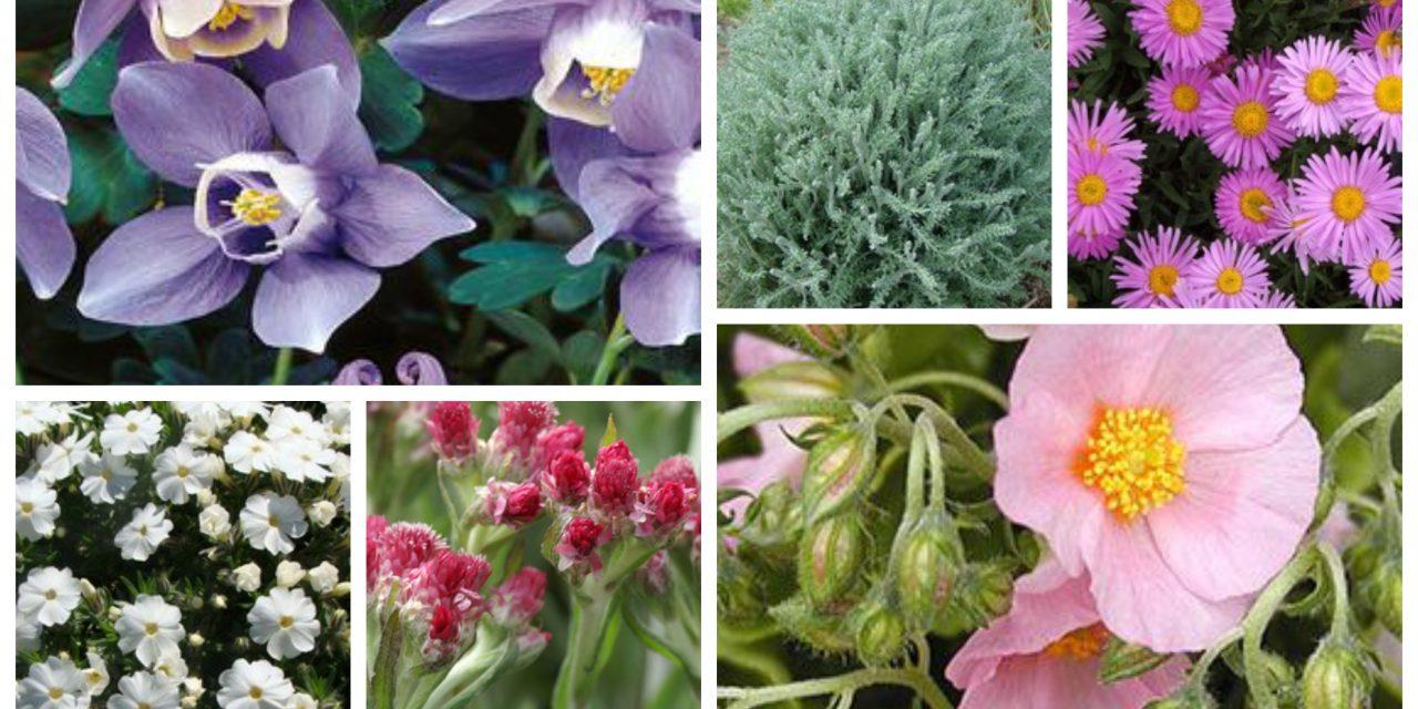 Íme a tíz legszebb sziklakerti növény!