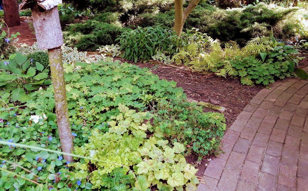 Gaz helyett: ültess talajtakarókat a kikopott fű és a murva helyére