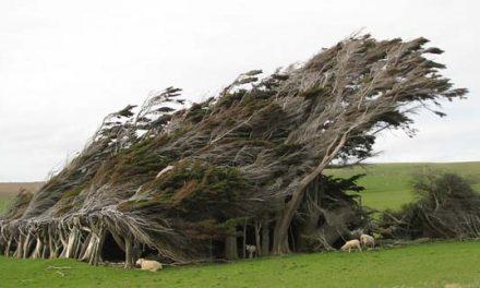 A sziget, ahol kidőlve nőnek a fák