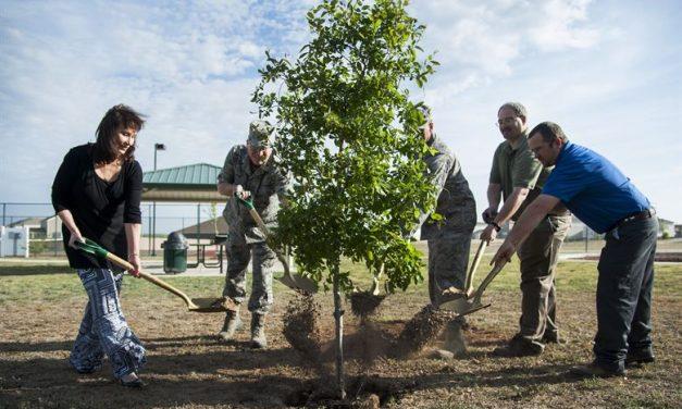 Új-Zéland keményen beleáll a klímaharcba: a terv évi 100 millió fa ültetése!