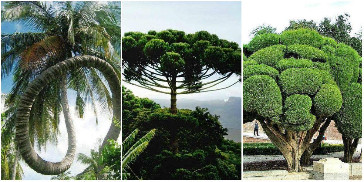 30+1 képen a világ legszebb fái