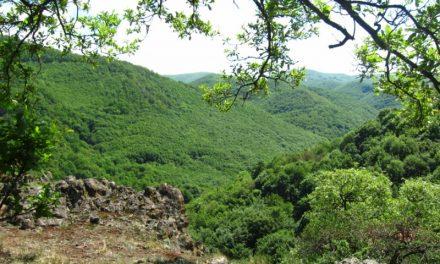 Petíciót indított a WWF Magyarország a Csarna-völgy megmentéséért