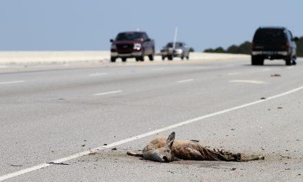 Tíz életmentő vadátkelő, hogy ne legyen több halál az utakon