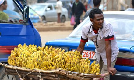 Végveszélyben a banán, de nem hagyják megmenteni