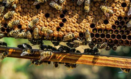 Végre korlátozzák a méheket pusztító növényvédőket