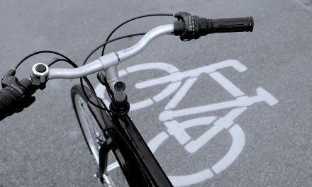 Kettős fasort vágtak ki a kerékpárút miatt Zalában
