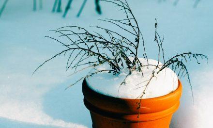 Megjött a tél, védjük a cserepes növényeinket!