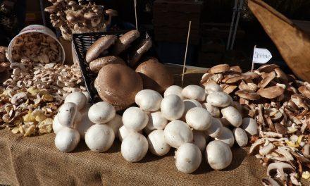 Külföldön is imádják a minőségi magyar gombát