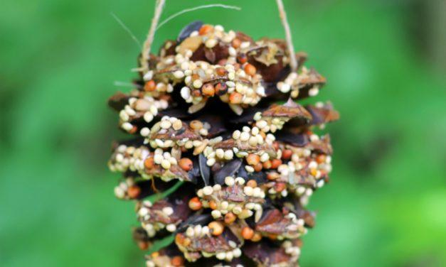 Tobozból is készülhet téli madárcsemege