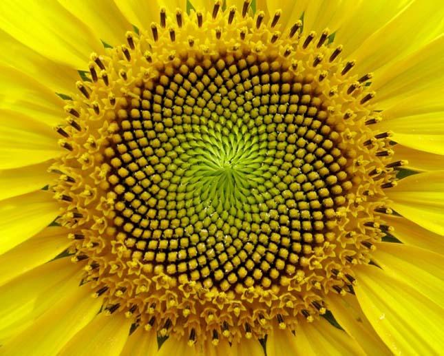 A legszebb geometriai formát alkotó növények