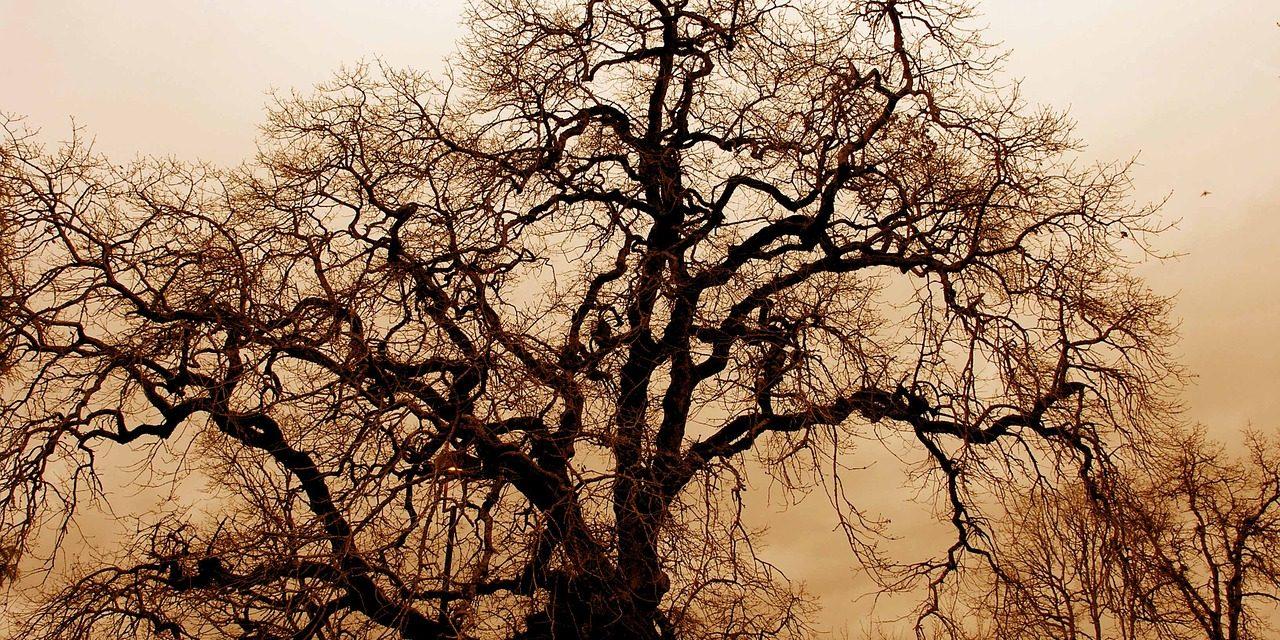 Folyékony nitrogén mentheti meg a veszélyeztetett növényfajokat