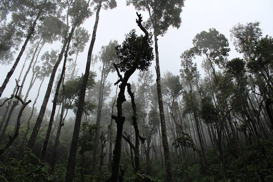 Klímaváltozás? Az erdők segítenek!