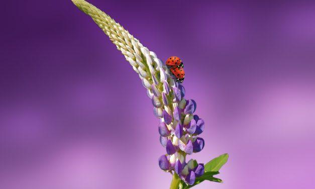 A hőhullámok drasztikusan csökkentik a hím rovarok nemzőképességét