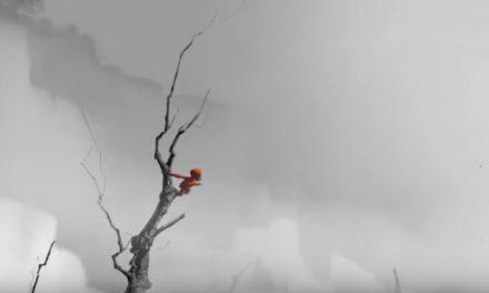 Betiltották az orangutánokért küzdő reklámot, mégis több millió a nézettsége