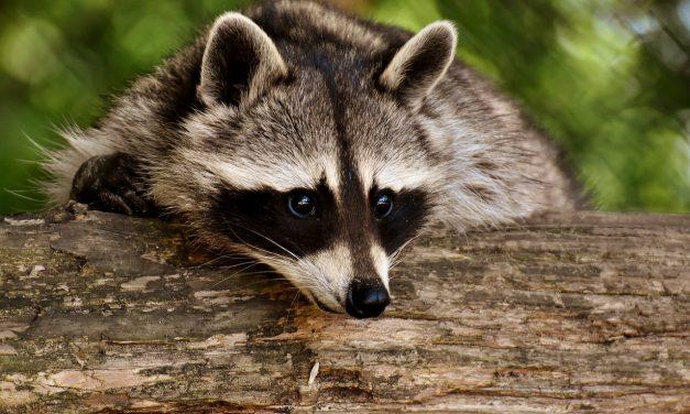 Európa legjobb állatkertje lett a Nyíregyházi Állatpark