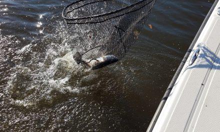 Rengetegféle vegyszer van a magyar tavakban és a halakban is