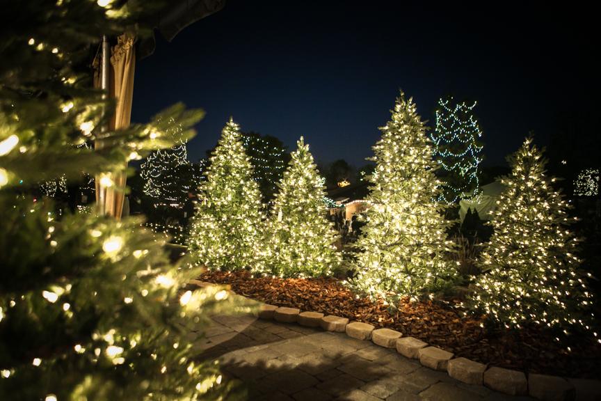 Van fád a kertben? Legyen belőle karácsonyfa!