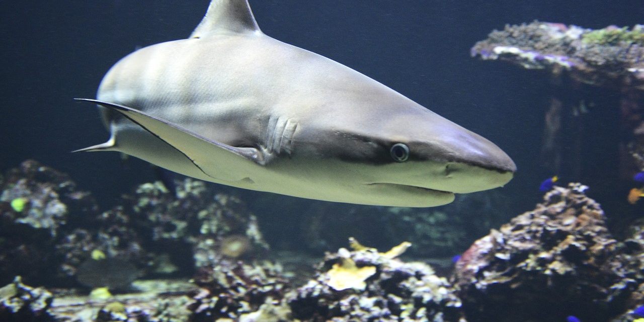 Elkészült a cápasuli és jól halad a biodóm építése az állatkertben