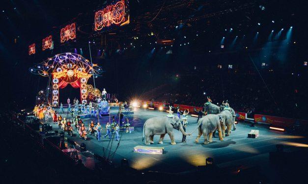 Petíciót indítottak pécsiek olyan cirkuszok ellen, amelyek állatokat használnak