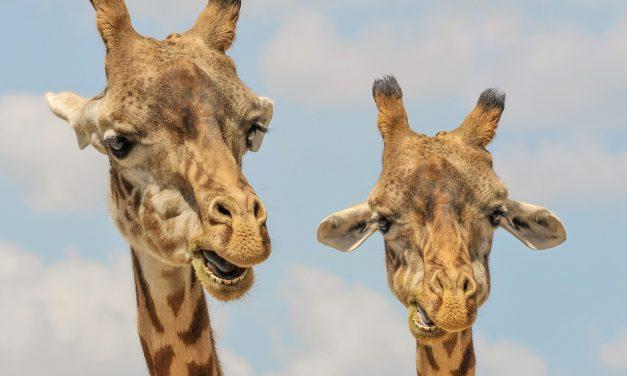 Története legsikeresebb évét zárta idén a Nyíregyházi Állatpark