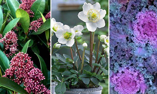 Virágok a téli kertbe