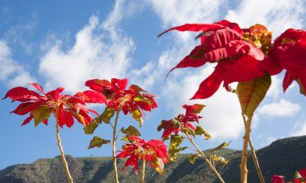 A virágok 50 millió évvel korábbról származnak egy kínai tanulmány szerint