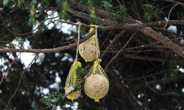Életmentő lehet az áttelelő madarak etetése