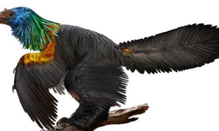 """Újabb mérföldkő az evolúciós folyamatban a """"szivárványdinó"""" felfedezése"""