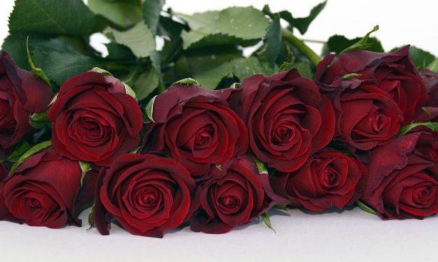 Megdöbbentő tények a Valentin napi rózsáról. Akár kokain is lehet benne
