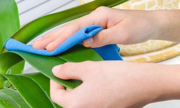 5 tuti tipp, hogy tisztán tartsd a szobanövényeidet