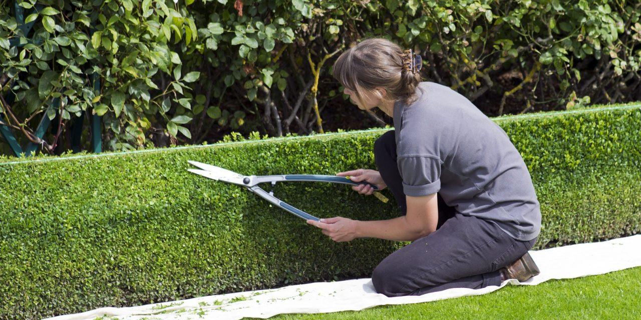 Ma nyit a kertészek mekkája, a Gardenexpo