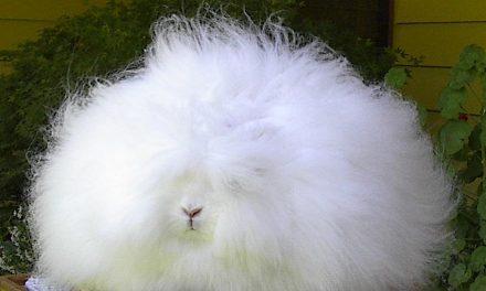 Tíz felejthetetlen tapsifüles, mert nem csak a húsvéti nyuszi vitte sokra