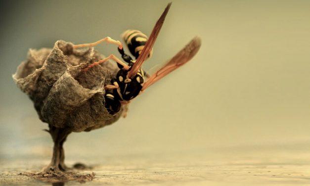 Íme a természet, egy biológus fényképezőgépén keresztül