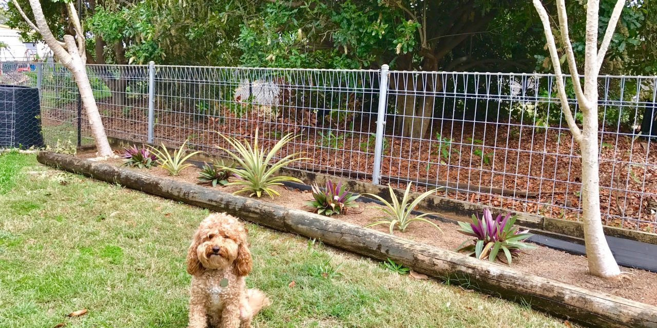 Életre keltettünk egy trópusi virágágyást