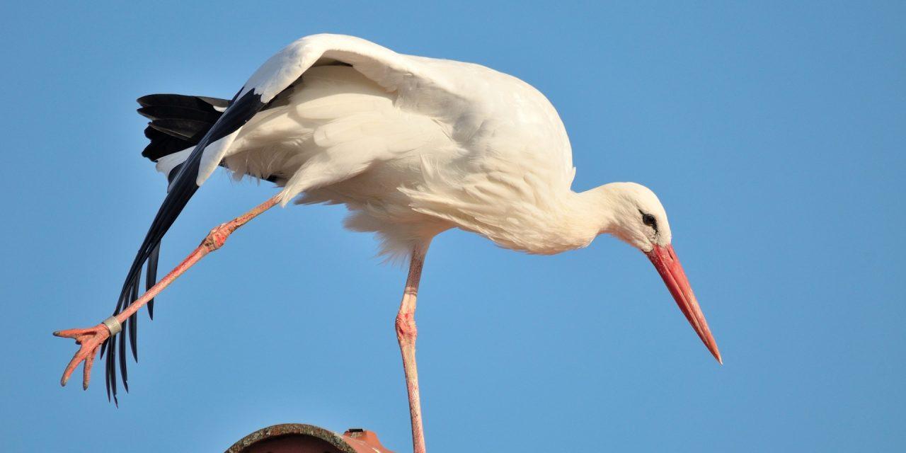Míg te megfagysz, addig a gólyák már rég a tollukat süttetik