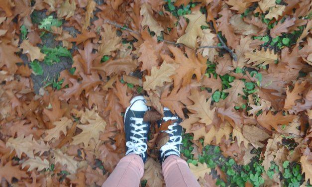 Miért színes az erdő ősszel?