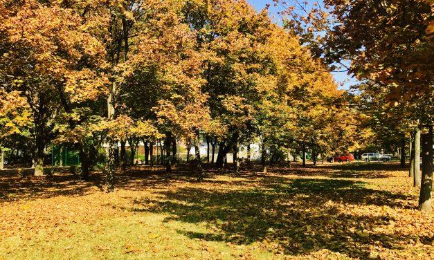 Zuglóban kivágnak 181 fát