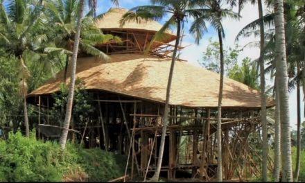 Félmilliós tanfolyam Balin a bambuszozásról, a hülyének is megéri!