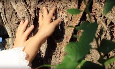 300 éves hős szelídgesztenye lett az év fája