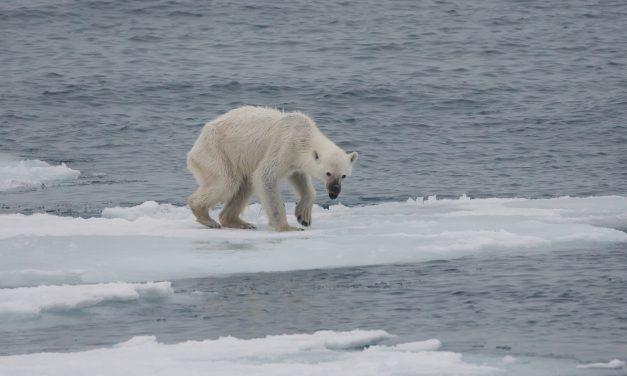 2018 egy környezetvédelmi segélykiáltás volt