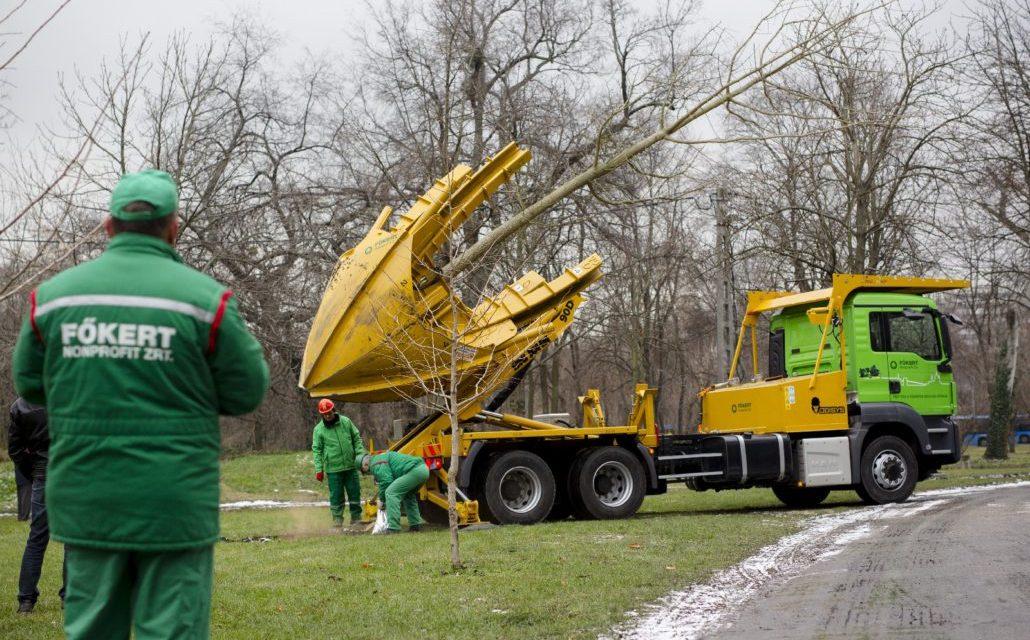 Vége az értelmetlen fakivágásoknak, a megoldás az idősfa-átültető monstrum