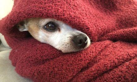 Tíz trükk, amivel melegen tarthatod kedvencedet a kutya hidegben