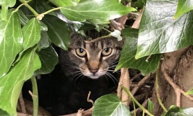 Láttál már macskát madárfészekben? Mutatjuk miért és hogyan került oda