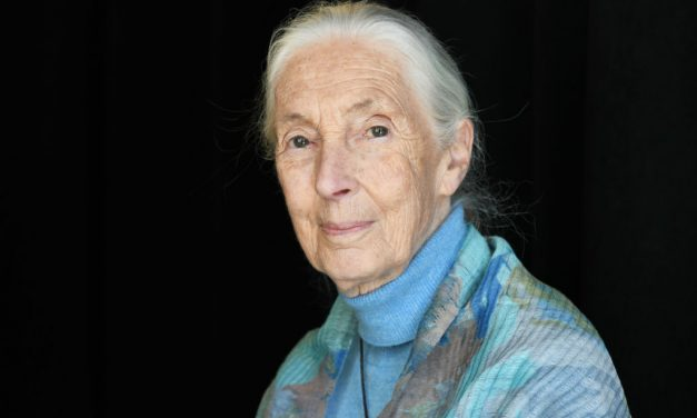 Jane Goodall az egyik legnagyobb pénzjutalommal járó díjat kapja meg