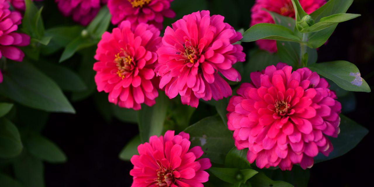 Ők a legszebb zöldségkertbe ültethető virágok