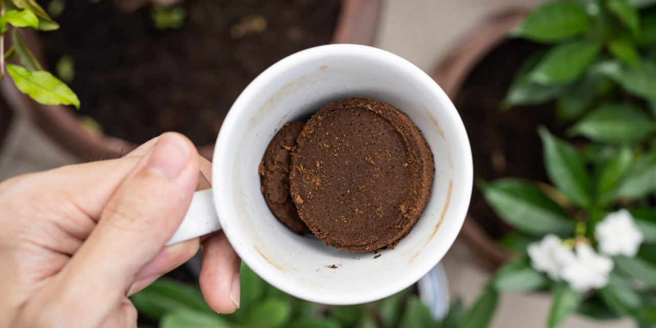 Ezért érdemes kávézaccot szórnod a növényeid köré