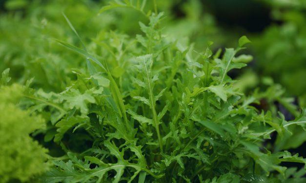 8 ehető kerti növény, ami az árnyékban is elél