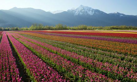 Szivárványszínű virágföldek, amiktől eláll majd a lélegzeted